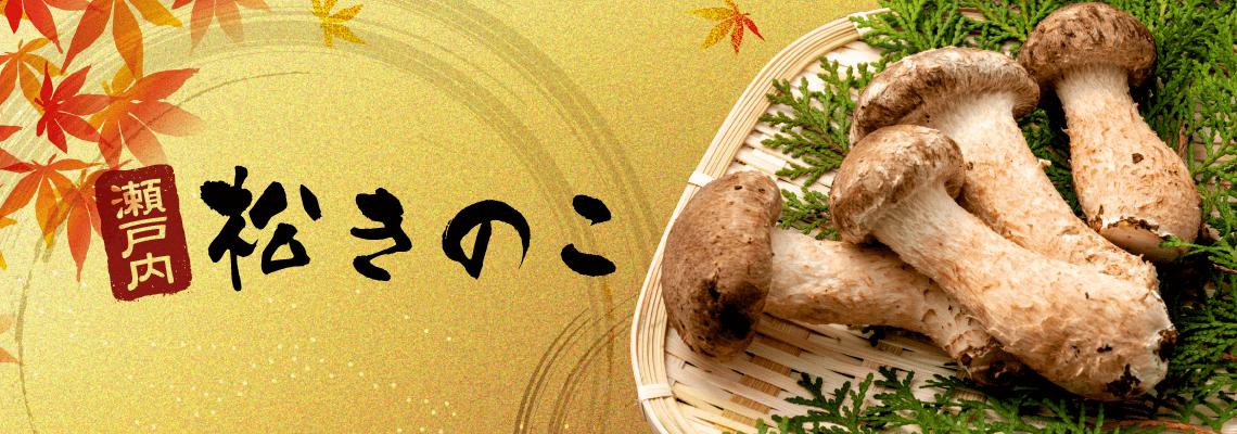 瀬戸内松きのこ_ロゴ